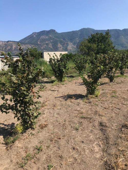 A S.Valentino T.,via Sciulia,terreno agricolo con palazzotto su due livelli