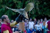 """Spettacolo Falconieri """"Bird Control"""""""