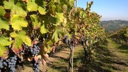 Masseria De Vito vini della Campania