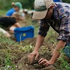 Esonero contributi previdenziali per lavoratori autonomi agricoli: INPS